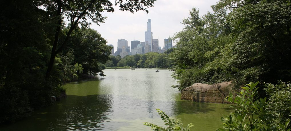 EEUU/NYC – DIA 7: Museo de Historia Natural – Central Park – Upper West Side
